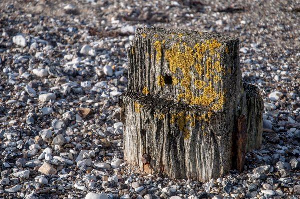 Zahn der Zeit - Alter Holzpfahl einer längst verfallenen Mole am Frederik VII - Kanal, Lendrup Strand Dänemark, November 2016